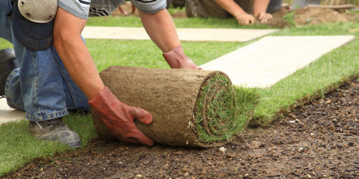 Contractors landscaping with sod